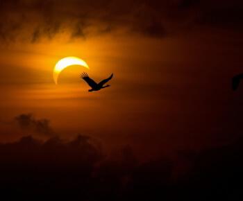 Pisces Solar Eclipse 2015
